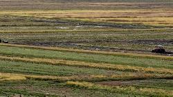 India Pesticides Grey Market Premium Falls 40%; Should You Subscribe?