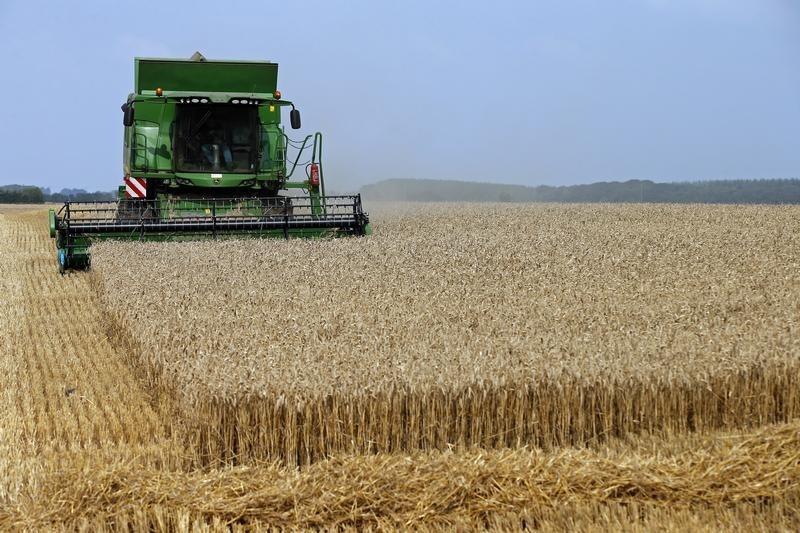 متعاملون: الجزائر تطرح مناقصة لشراء كمية اسمية 50 ألف طن من القمح الصلد