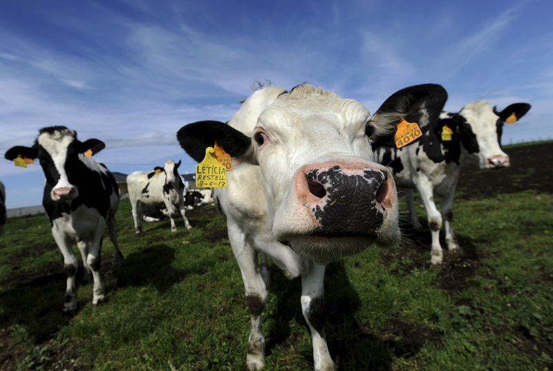 Ben & Jerry's is sued over 'happy cows' claim