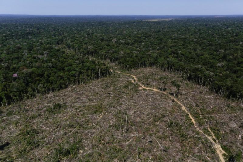 Operação Samaúma já aplicou R$ 57 milhões em multas ambientais