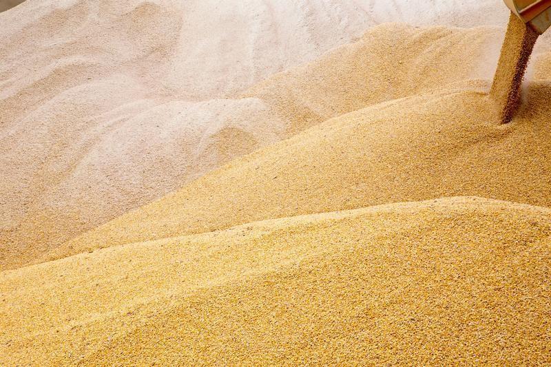 Экспорт зерна из России в июне может составить 1,9 млн тонн - эксперт