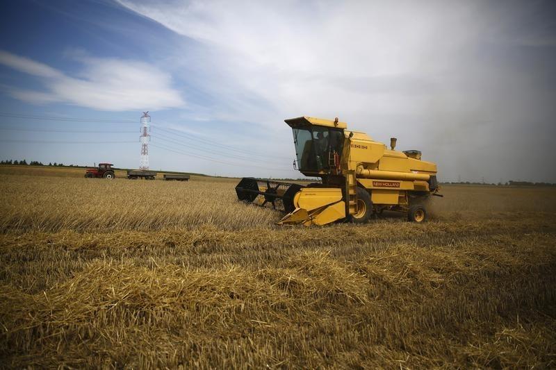 Россия в июле-сентябре сократит экспорт пшеницы на 9%