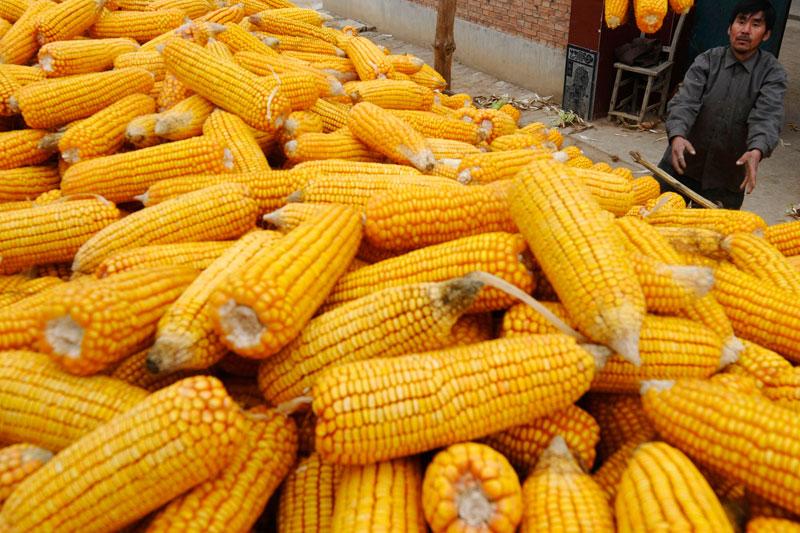 聯合國糧農組織:全球食品價格已上漲至近10年來最高水平提供者財聯社