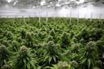 Cannabis SPAC deals hit nadir after investors snub sector