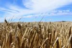 China to follow WTO procedures regarding Australian barley dispute - Xinhua