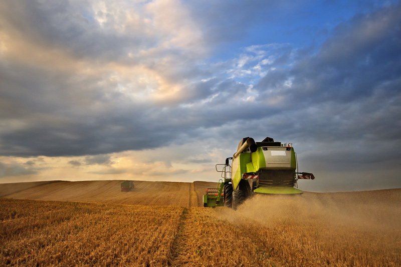 Grain futures higher on South America crop woes, bargain buying