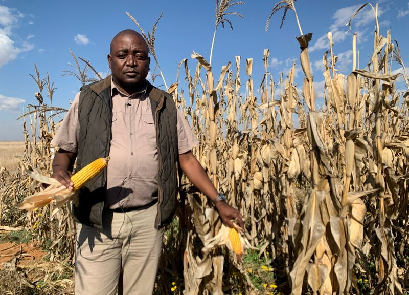 South African farmers dream of drought cover on climate front line
