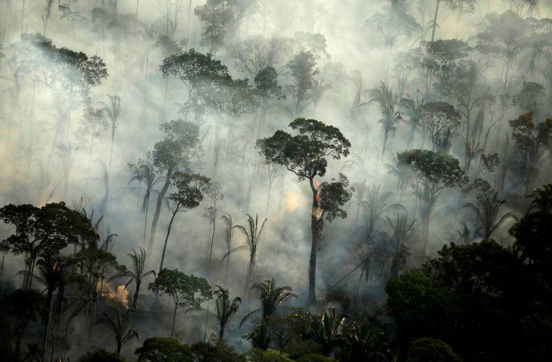 Mais de 10.000 espécies correm risco de extinção na Amazônia, diz relatório