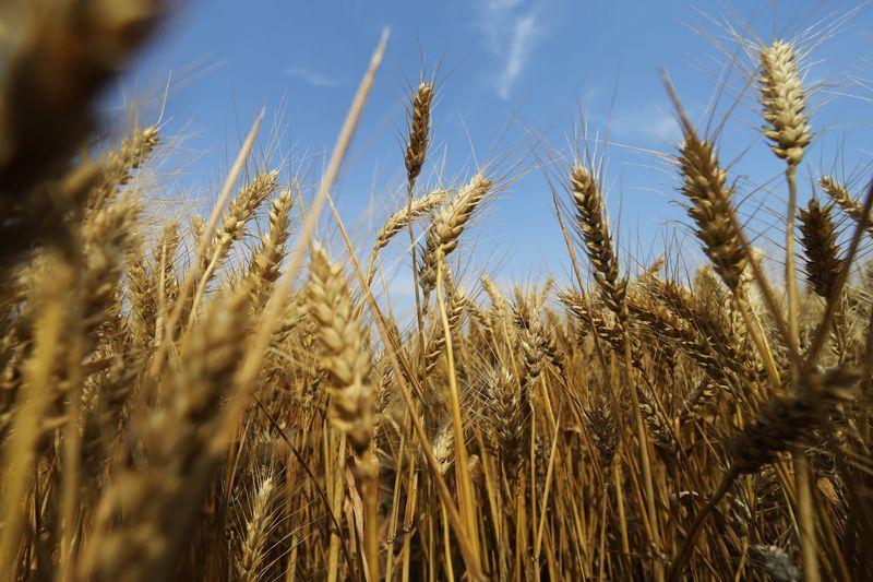 Plantio de trigo no RS avança pouco na semana e chega a 94% à espera de chuvas, diz Emater
