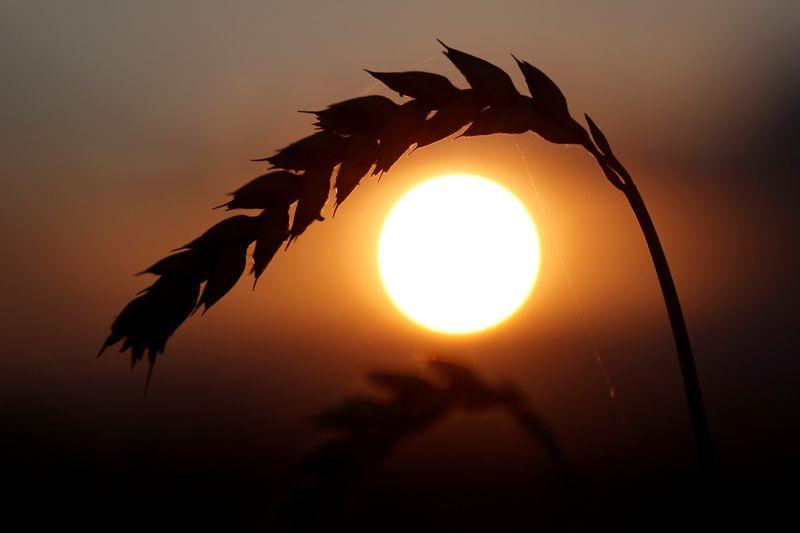 Trigo avança com persistência de seca; soja recua