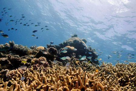 """UNESCO keeps Great Barrier Reef off """"in danger"""" list after Australian lobbying By Reuters"""