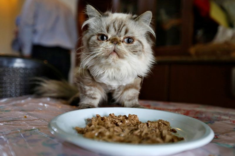 Pet food shortages leave owners on the hunt for kibble and cat treats