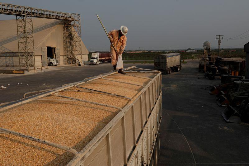 Bolsonaro assina MP que autoriza compra de até 200 mil t de milho para criadores