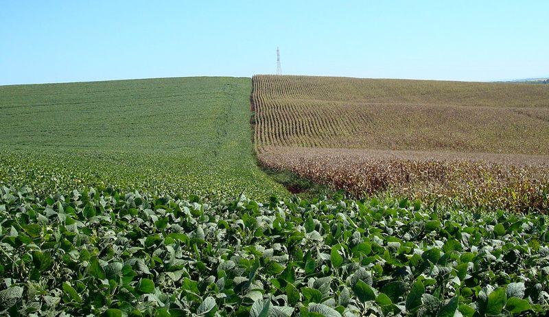 Paraná prevê maior plantio de soja e milho verão em 2021/22; preços impulsionam o cereal