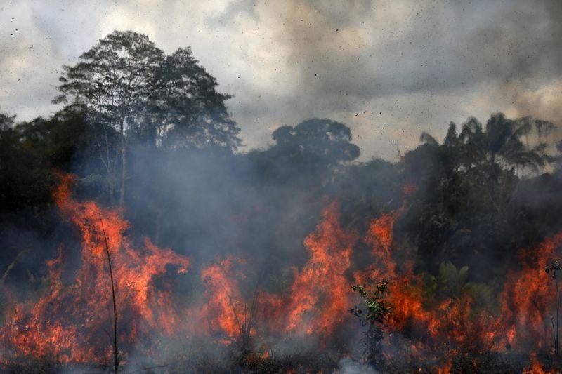 Incêndios voltam a crescer na Amazônia com desmatamento da floresta