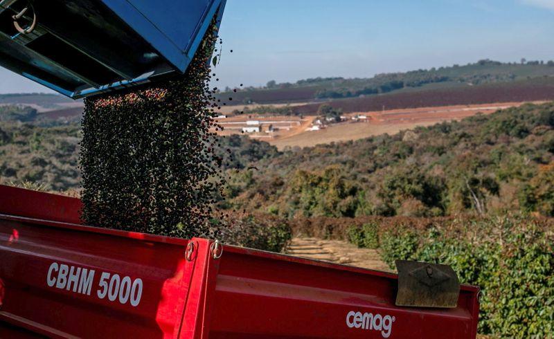 Exportação de café do Brasil despenca em agosto, Cecafé culpa entraves logísticos