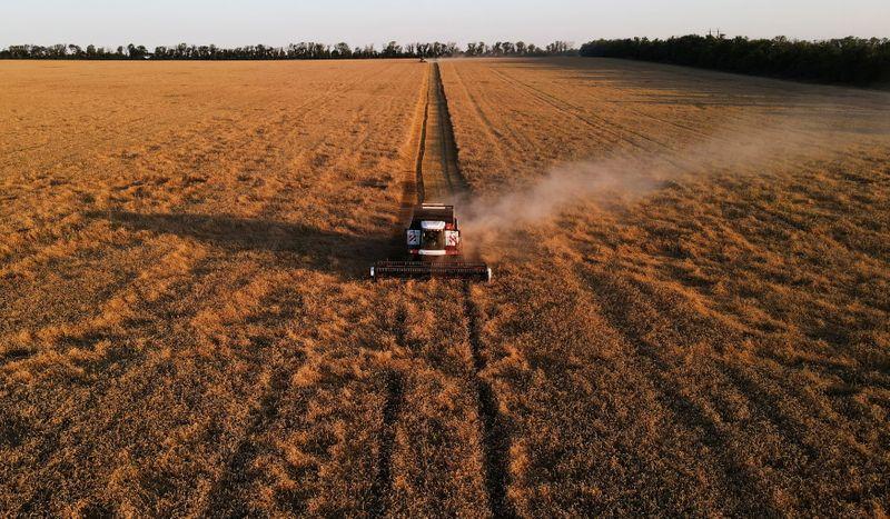 IKAR corta previsão para safra de trigo 2021 da Rússia por seca