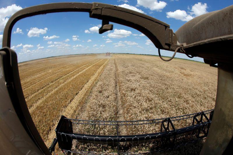 Украина увеличила сбор пшеницы до 33 млн т в 2021 г -- Минагрополитики