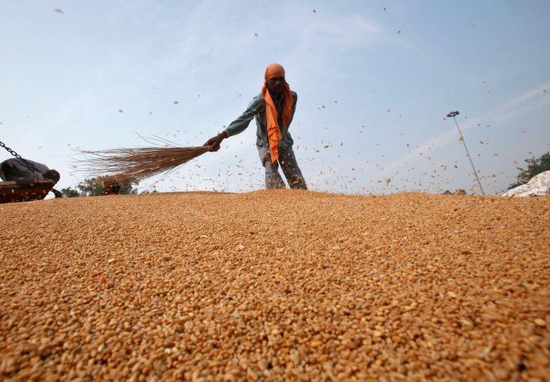 Produção de grãos de verão da Índia deve ser recorde em 2021/22