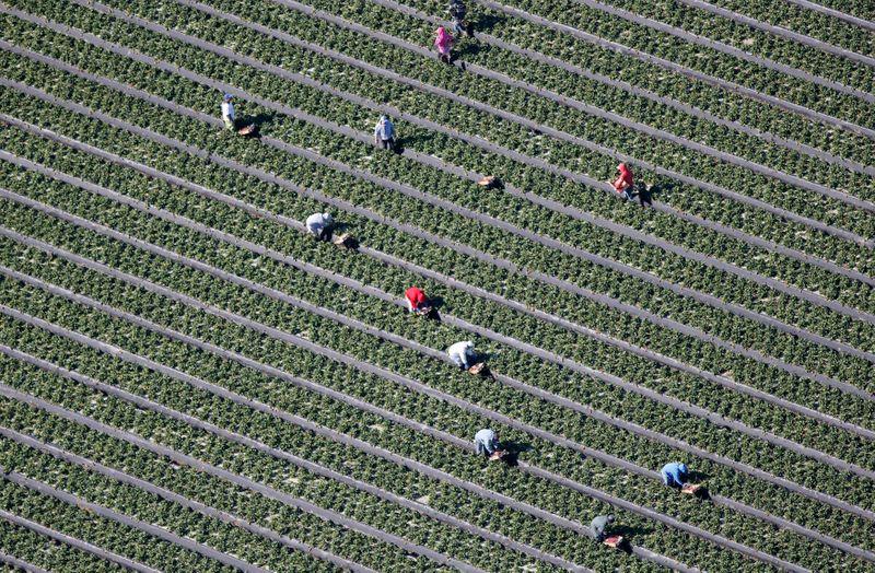 Grupo de produtores dos EUA anuncia campanha contra monopólio na agroindústria