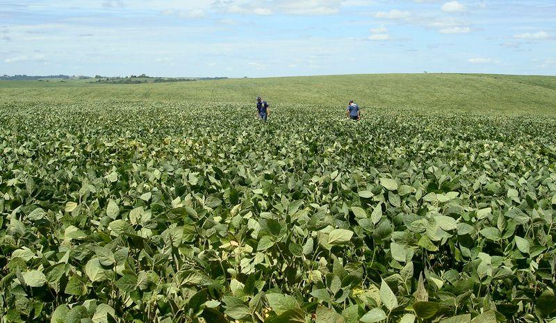 Paraná vê safra de soja 21/22 em 20,96 mi t; aguarda chuva para avançar no plantio