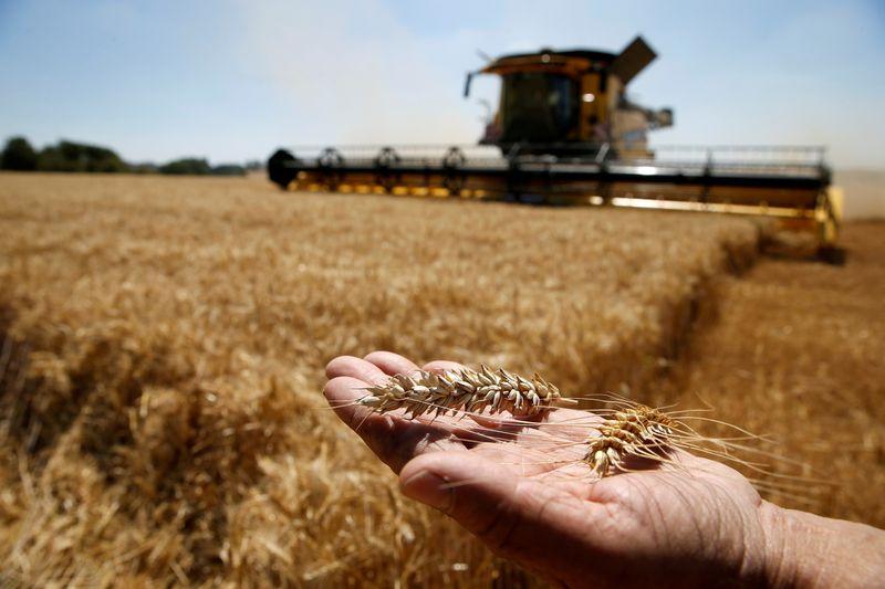 China intensifica importações de trigo australiano apesar de impasse comercial