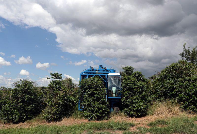 Exportaciones de café de Brasil caen 29% en septiembre por obstáculos a los envíos
