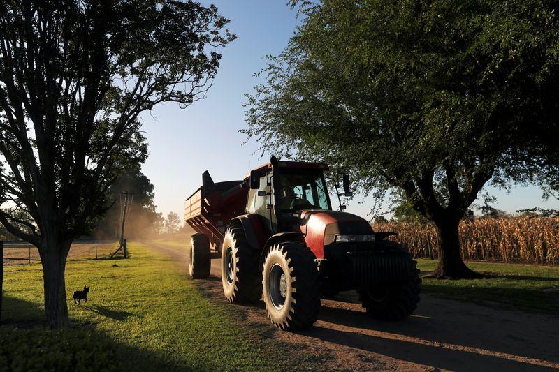 Chuvas ajudam plantio de milho da Argentina em momento de incertezas por política de exportação