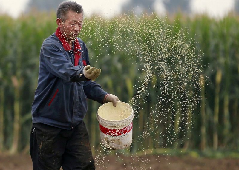 Chinese corn gets cheaper, regains lost share from wheat in feed rations By Reuters