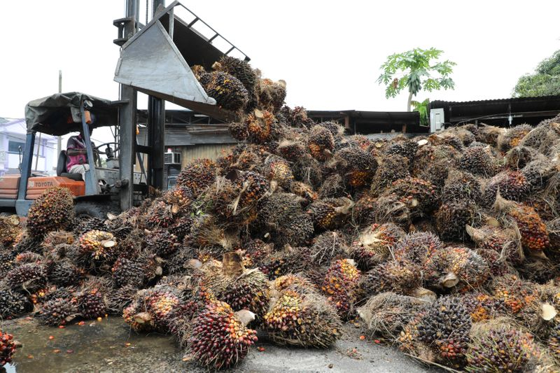 Canada probes forced labour claims in Malaysian palm oil, glove-making industries