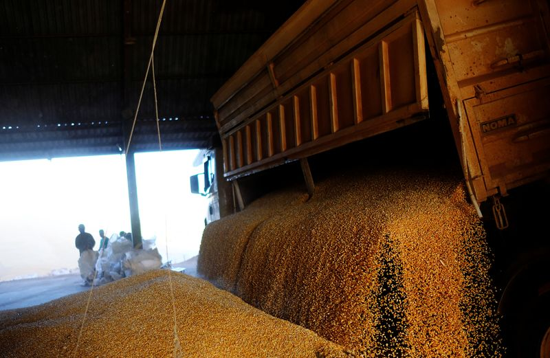 Conab reduz estimativa de safra de milho do Brasil e vê mais importações