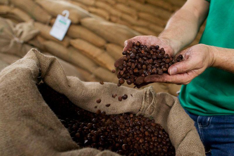Suministros globales de café serán ajustados hacia final de temporada 2021/2022: analistas