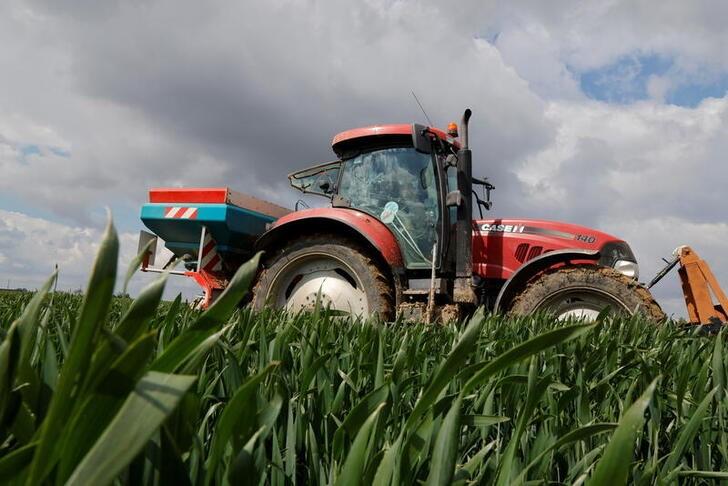Calidad del trigo francés mejora por condiciones favorables del clima