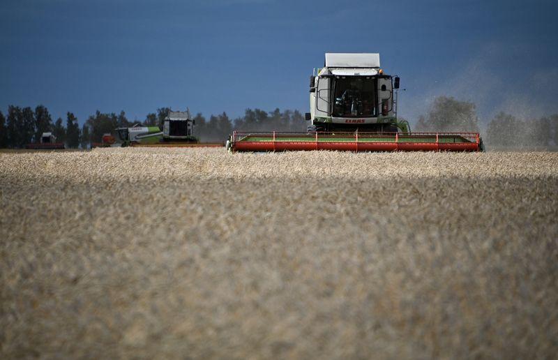 Sovecon sube previsiones para cosecha de trigo de Rusia en 2021