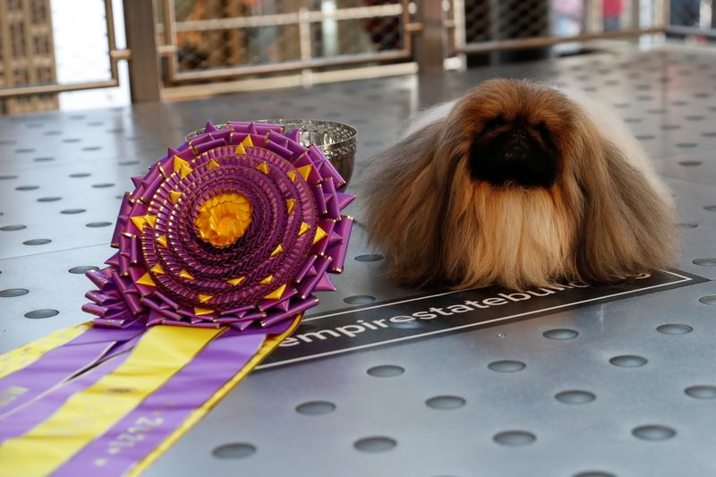 Wasabi the Pekingese won Westminster Dog Show with pride and lots of steps, says Kennel Club