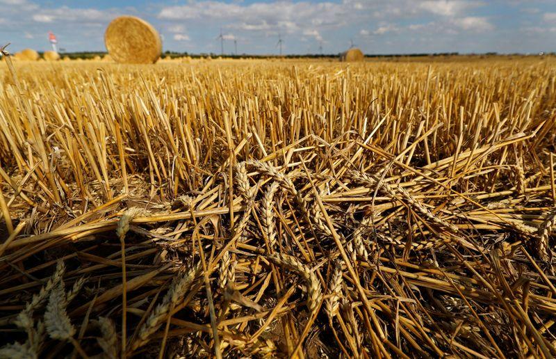 Clima favorável dá impulso a safras de trigo e canola da Alemanha em 2021
