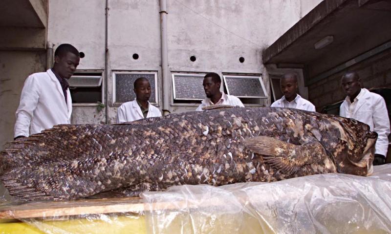ظهرت قبل 400 مليون سنة .. سمكة أقدم من الديناصورات ما زالت تدهش العلماء