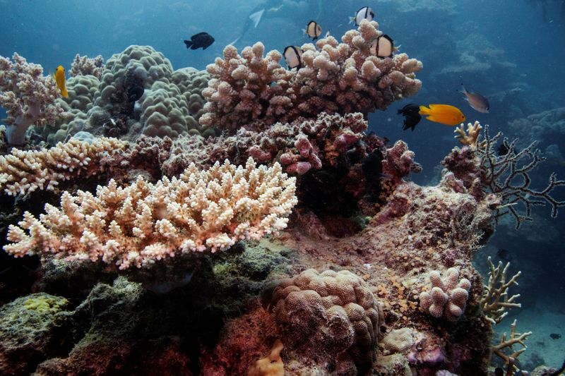 Great Barrier Reef should be listed as