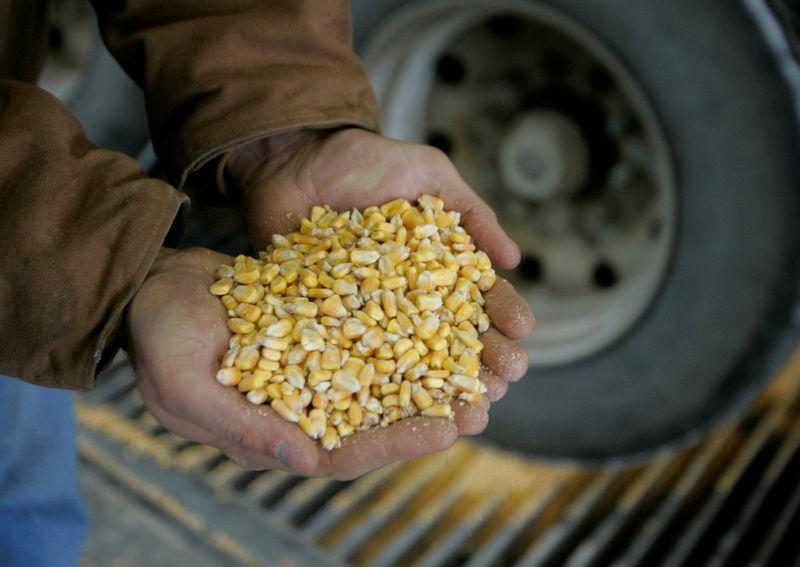 GRANOS-Futuros del maíz se hunden por perspectivas del clima en EEUU