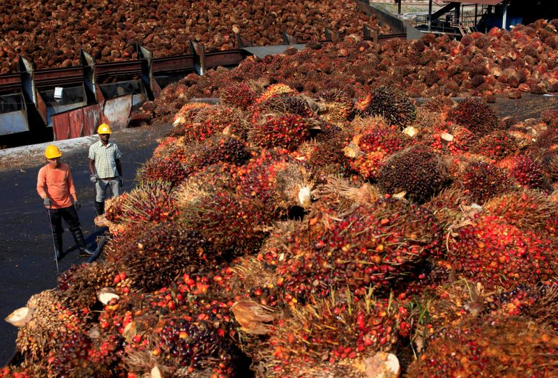 Malaysian palm giant IOI to conduct audit after report alleging labour abuse
